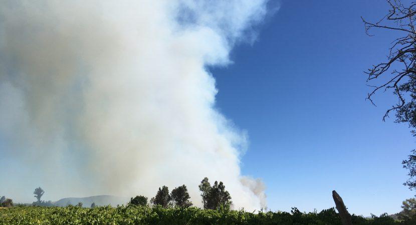 Incendios forestales atacan diversas comunas de la zona central del país
