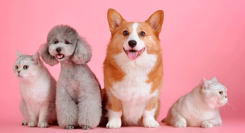 35% de los hogares de capitales regionales de Chile incluyen mascotas en sus presupuestos