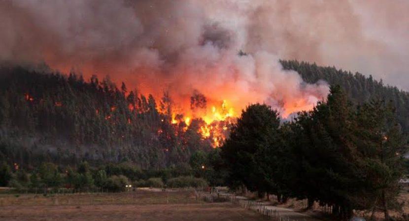 Onemi informa que 13 incendios forestales se mantienen activos a nivel nacional