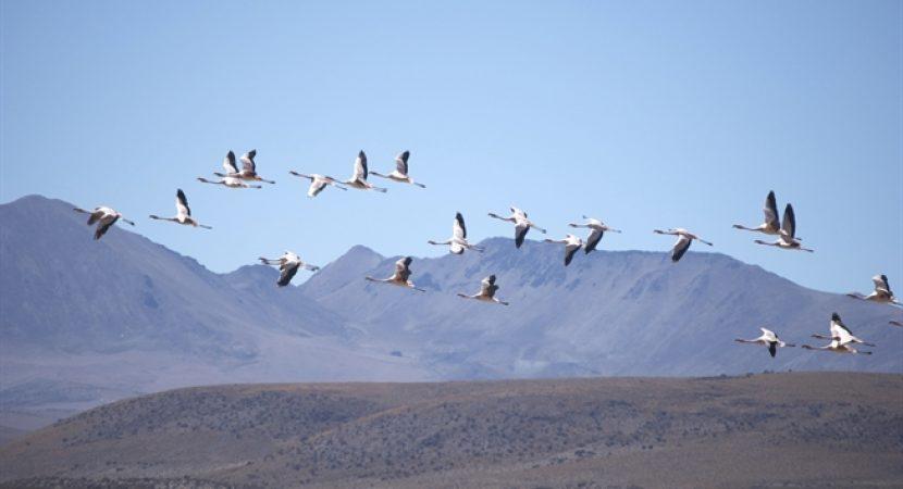 Presidente Sebastián Piñera anuncia la creación de los nuevos Parques Nacionales Río Clarillo y Salar del Huasco