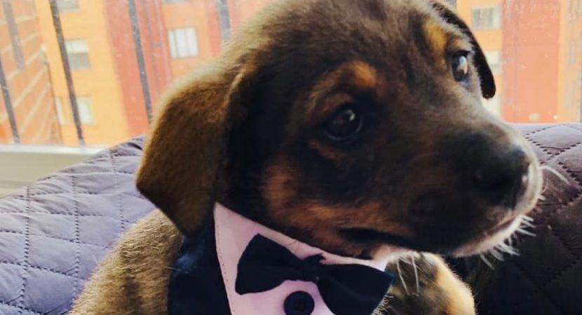 Perrito de Colombia fue dejado plantado con su ropita nueva cuando iba a ser adoptado por su nueva familia