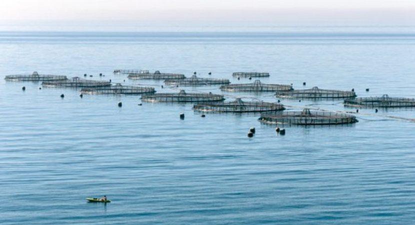 Acuicultura y bienestar animal abordaron en conversatorio de Derecho en La Serena