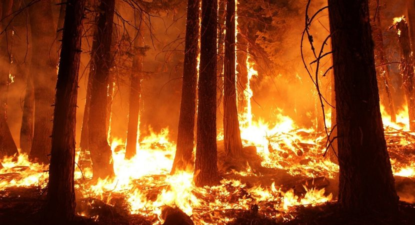 Incendios forestales de Estados Unidos dejan siete fallecidos y tres estados afectados