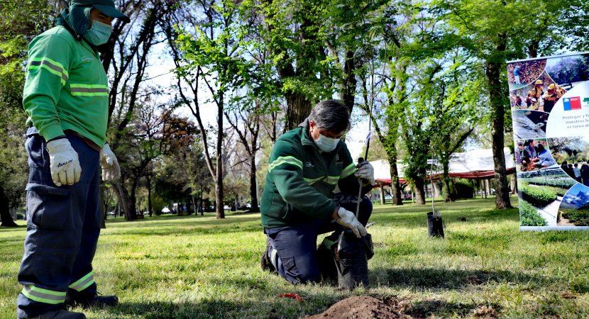 Santiago sumará 2.000 árboles a sus áreas verdes