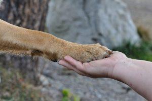 Conoce la iniciativa que busca transformar las «palomas» de candidatos en refugio para perritos