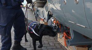 Entre el 2019 y 2021 canes detectores de Aduanas han protagonizado la incautación de 700 kilos de drogas