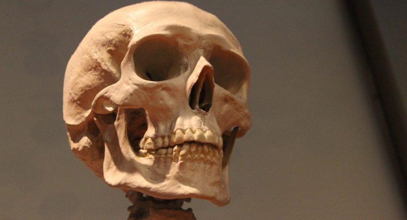 Científicos estudian posible nuevo paciente cero de la Peste Negra en humano muerto hace 5 mil años