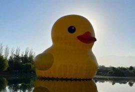 El famoso Pato de Hule regresó a Chile de la mano de el Festival Hecho en Casa