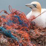 Informe de la ONU sobre contaminación por plásticos advierte sobre falsas soluciones y confirma la necesidad de una acción mundial urgente